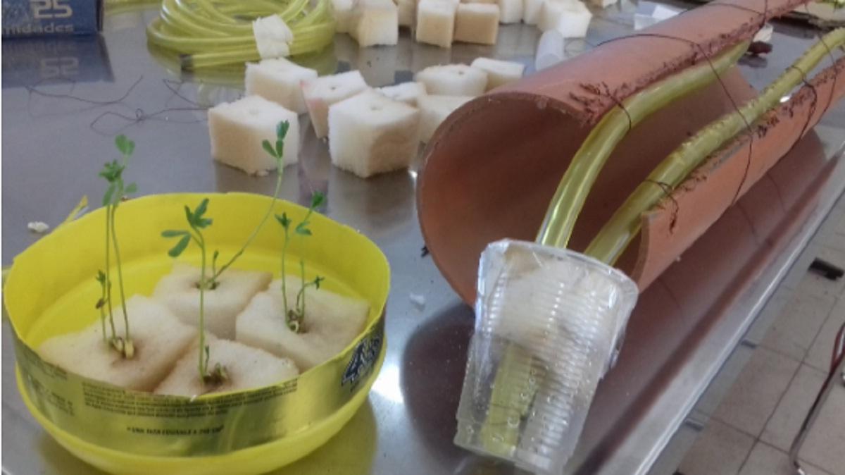 Agricultura hidropónica en los laboratorios de la ETec